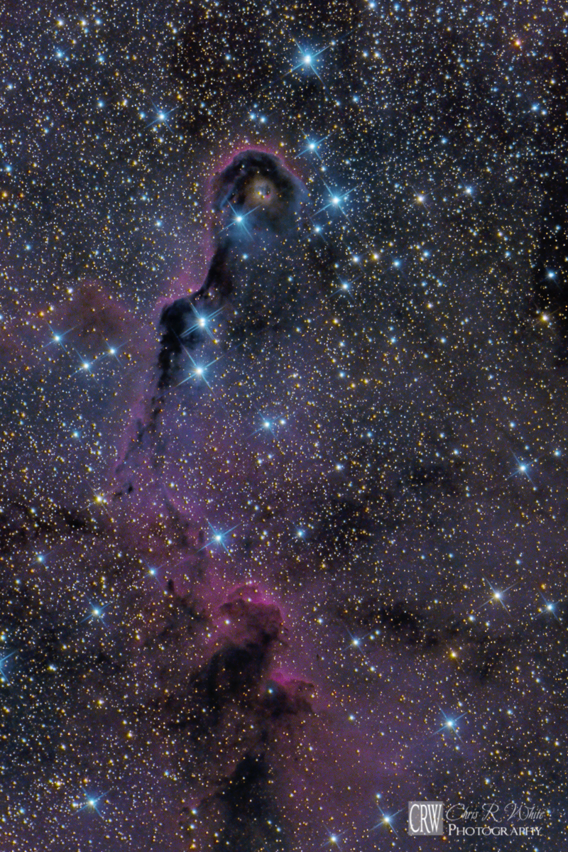 Close Crop of The Elephant's Trunk IC 1396A.  This is Believed to be an Active Star Forming Region. ~Click Image for a Larger View~
