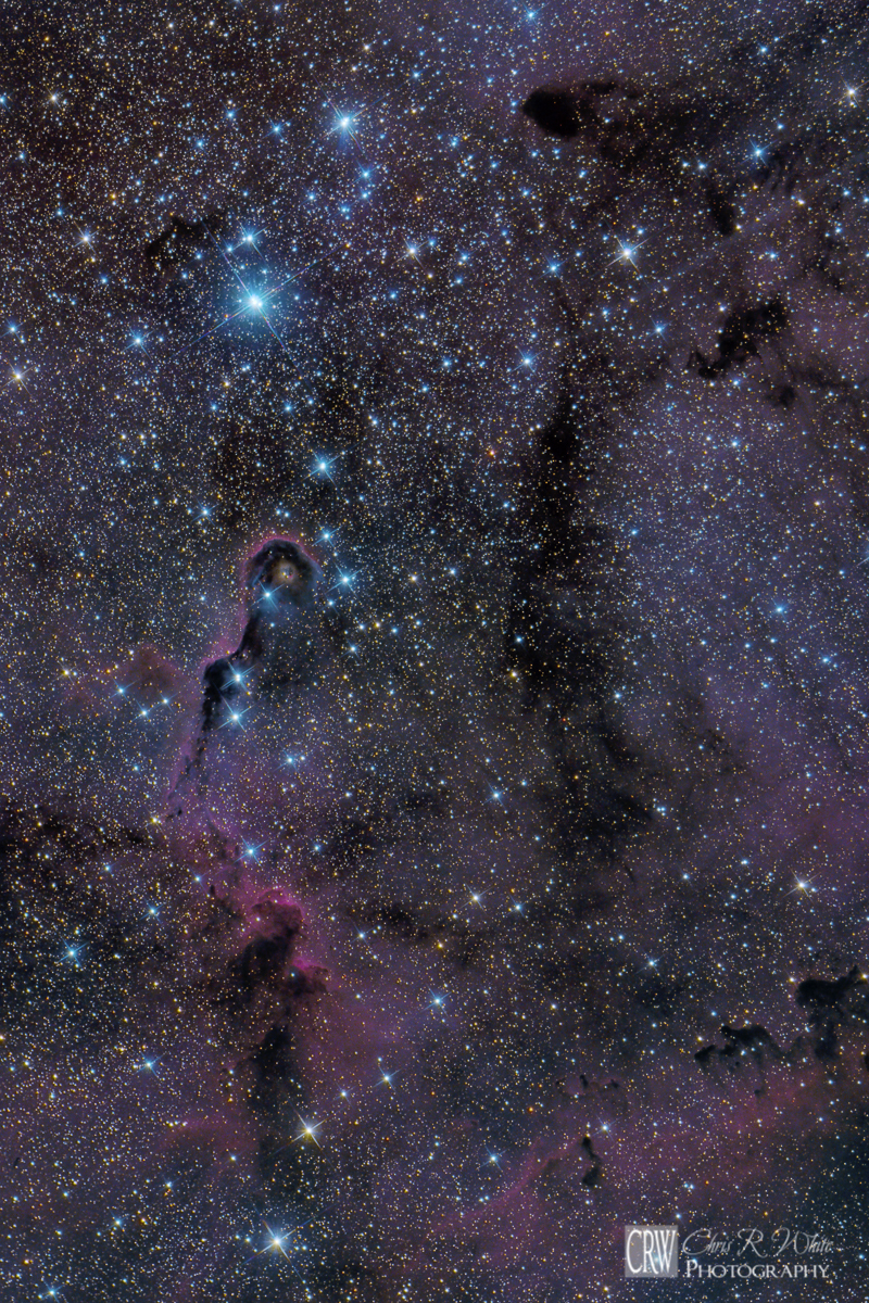 Widefield View of IC 1396 ~Click Image for a Larger View~